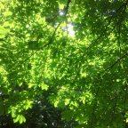 Green-Washing-Negocio-Responsable-Dia-Medio-Ambiente