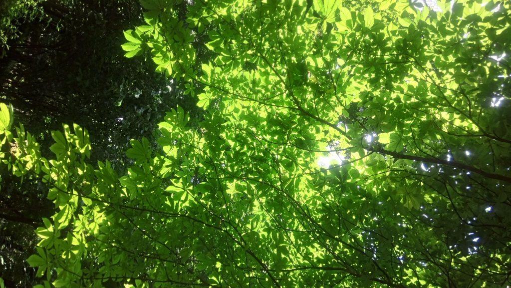 Green-Washing-RSC-Medio-Ambiente